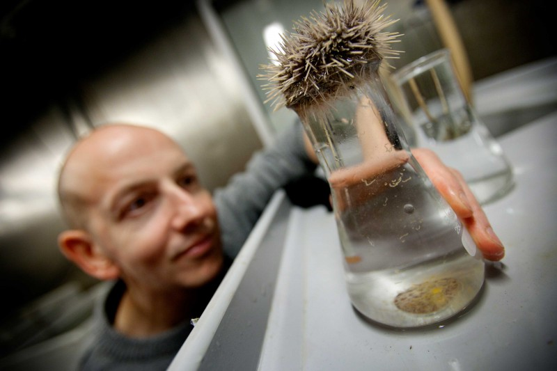 Sam Dupont cultivates different types of marine animals e.g sea urchins, by mixing eggs and sperm from adult individuals.