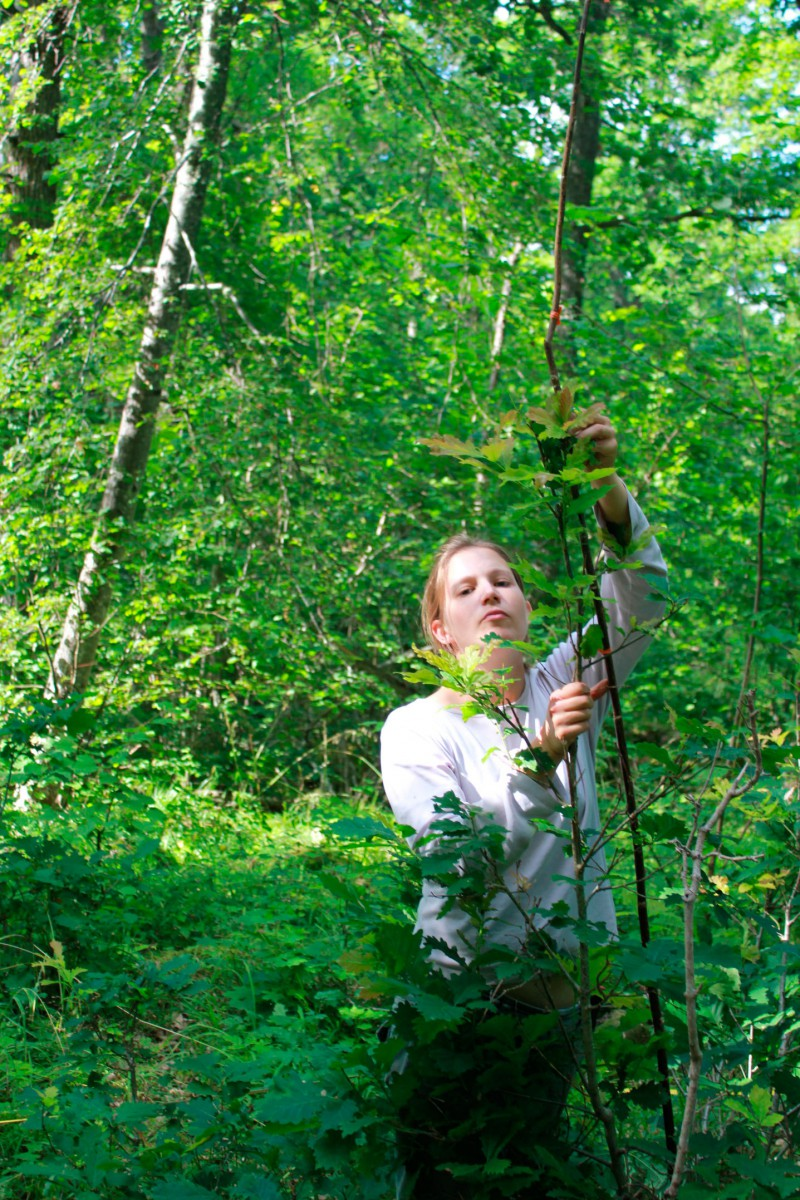 Doctoral student Jenny Leonardsson has studied nature reserves with oak forests.