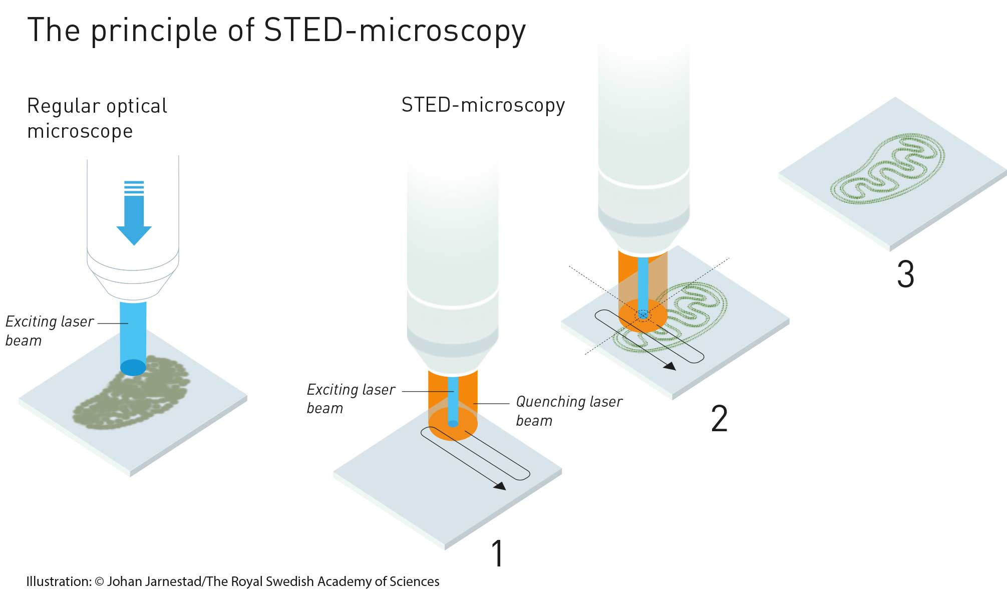 The principle of STED, based on laser scanning microscopy and the principle of extinction by way of stimulated emission.